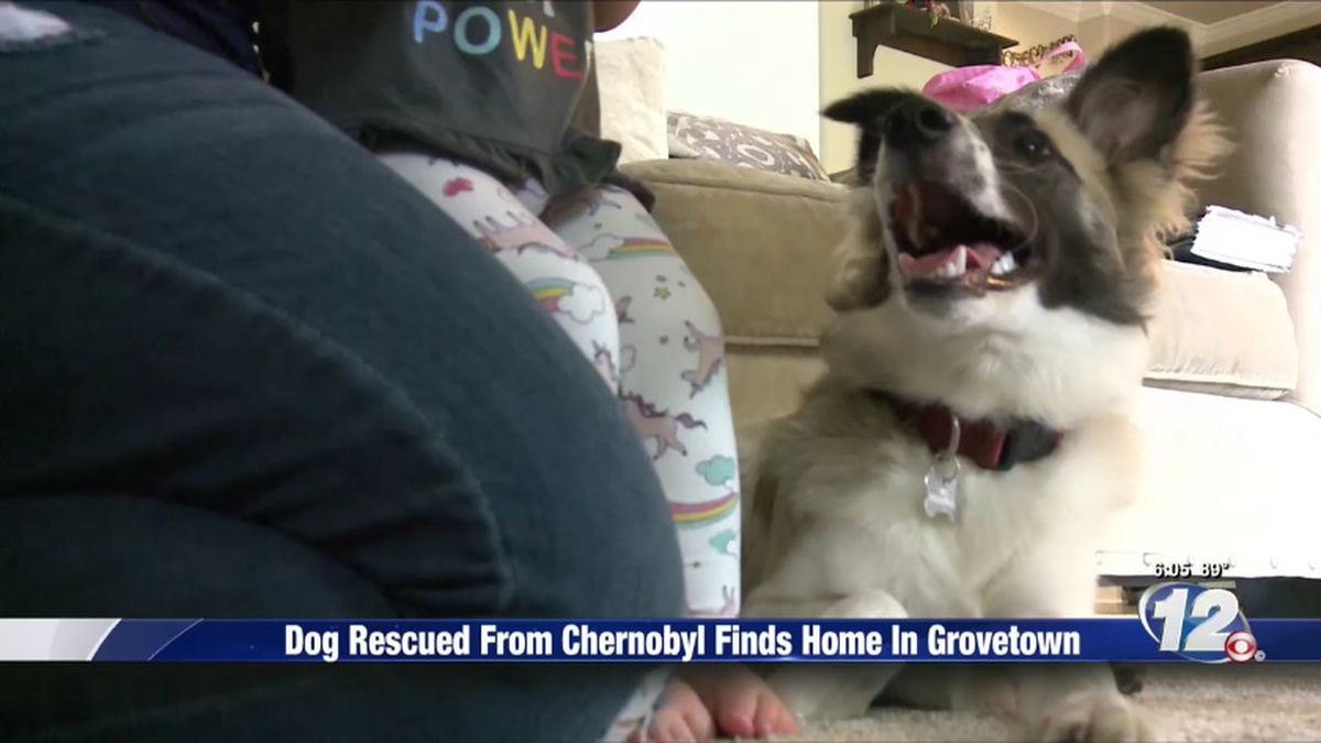 Rescued dog's journey from the Chernobyl testing site to a ...