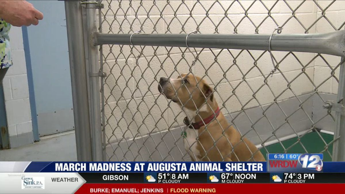 Augusta Animal Shelter is hosting its own March Madness special to help the animals get...