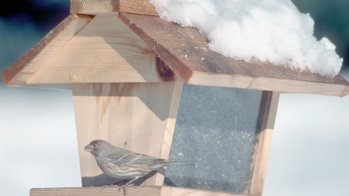 Fish and wildlife officials are recommending that residents take down their backyard bird...