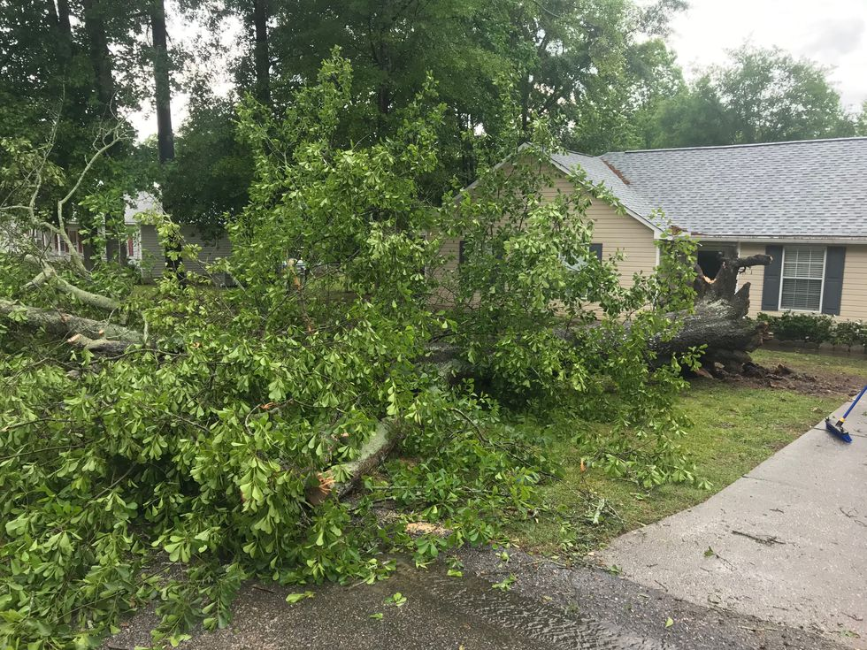 A storm knocked down some trees as it moved through the CSRA on Tuesday afternoon.