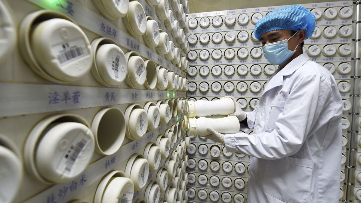 In this photo released by Xinhua News Agency, a pharmacist processes the granules of...
