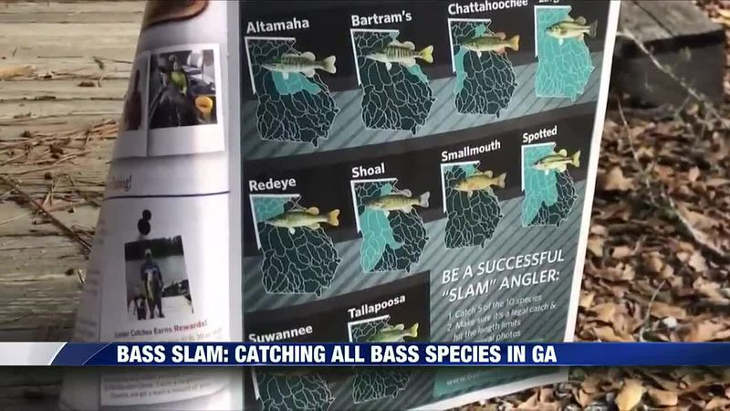 Catch 5 of the 10 black bass species in Georgia to complete the Bass Slam.