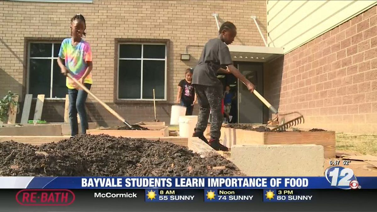 Students at Bayvale Elementary are learning more about food through a new in-school program....