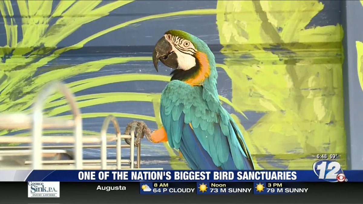 Feathered Friends Forever bird sanctuary is making waves in Harlem. (Source: WRDW)