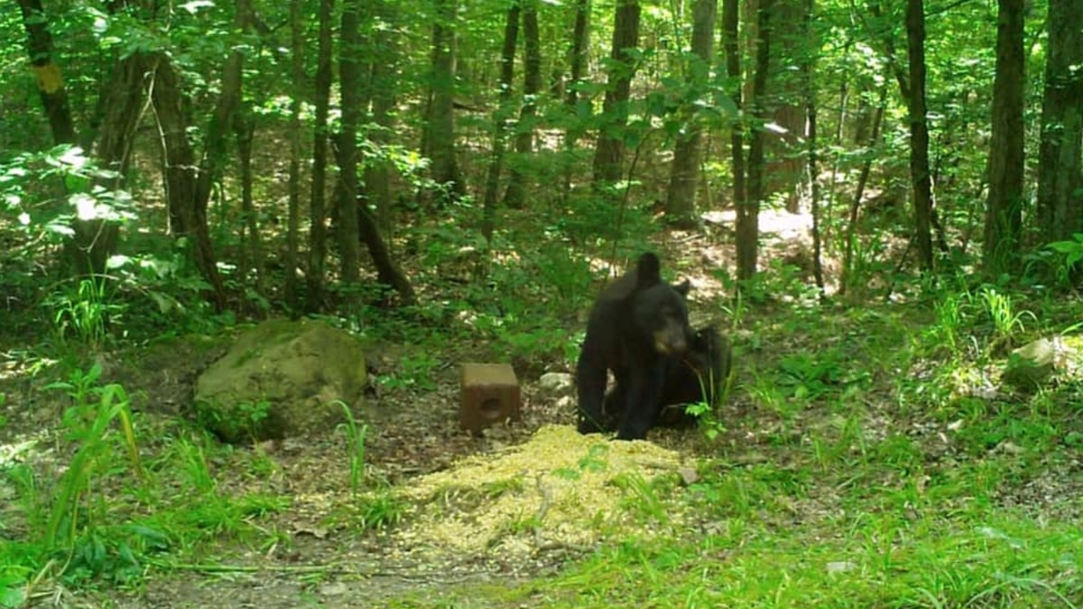 Just in time for the summer, we've got our first black bear sighting of the season in Edgefield...