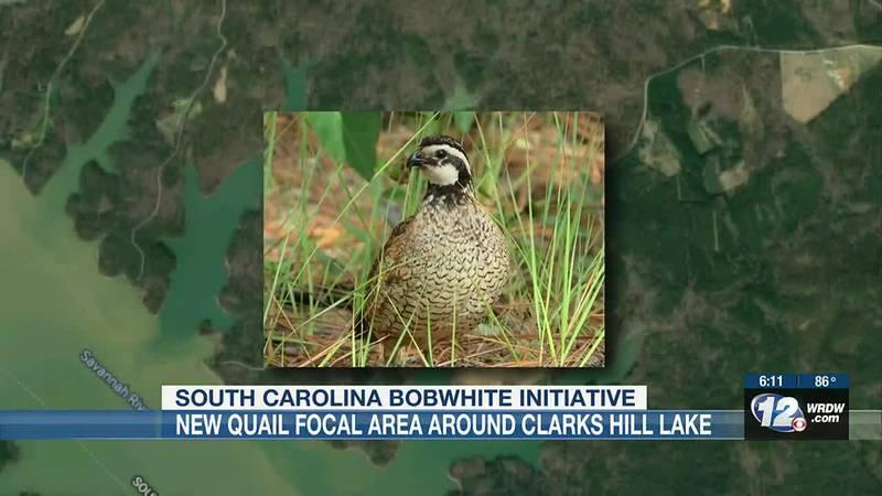 SCDNR, USACE, and SCBI team up to dedicate 3,000 acres to Quail habitat restoration