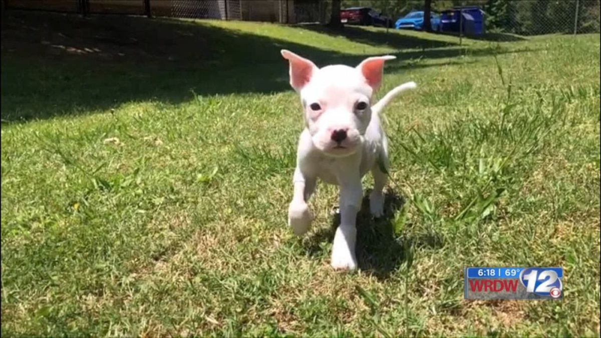 Meet Alfie, a cute pup with a strong story of survival! (Source: WRDW)