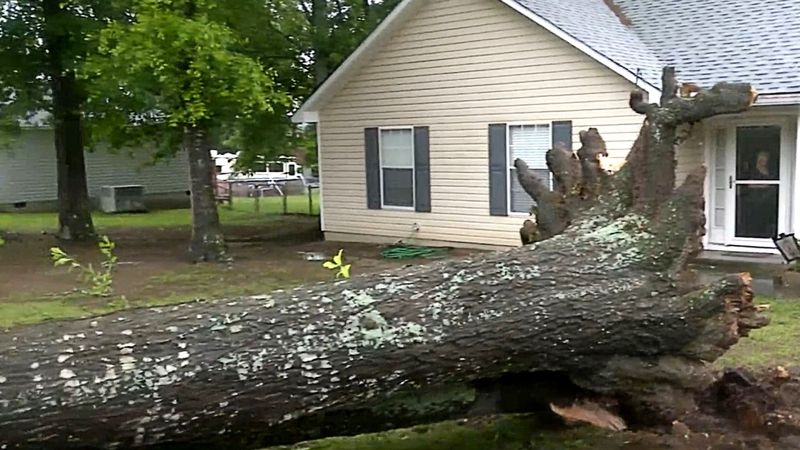 Trees were toppled across the CSRA when a storm blew through the region on May 4, 2021.