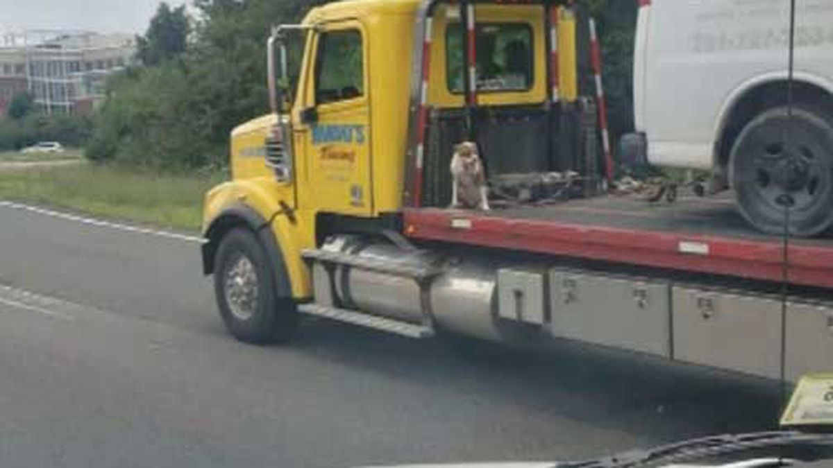 A photo showing a dog riding on the back of a tow truck sparked online outrage. (Source: WBZ/Michael Gerry/CNN)