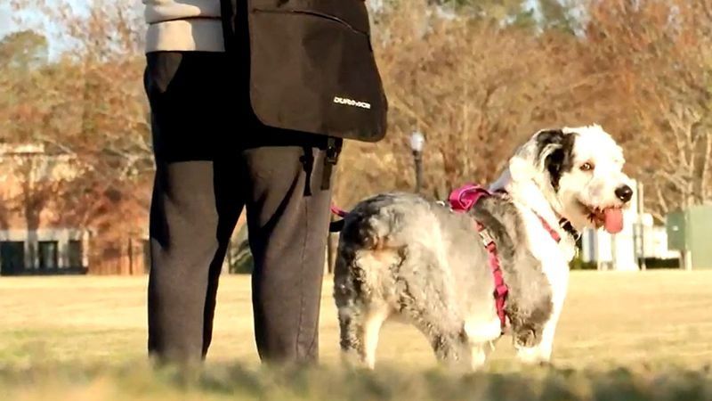 Pet owners will never forget the real heroes who stood by their side and gave them them the...