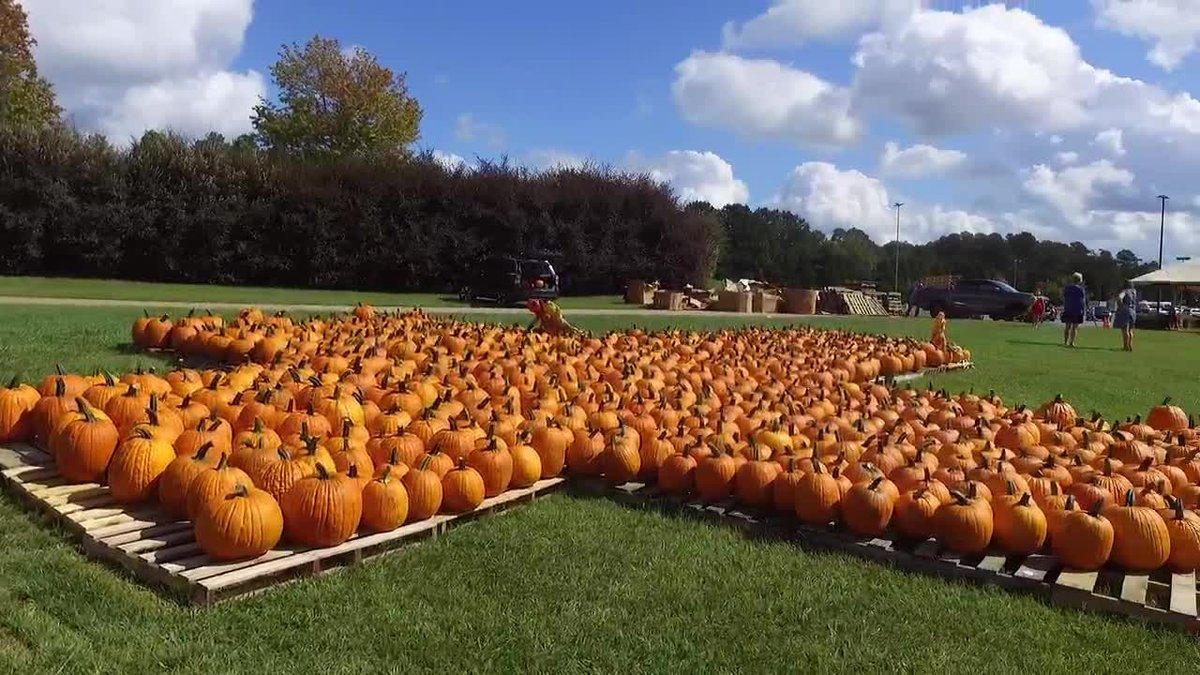 DRONE FOOTAGE: Wesley United Methodist Church pumpkin patch in 2020.
