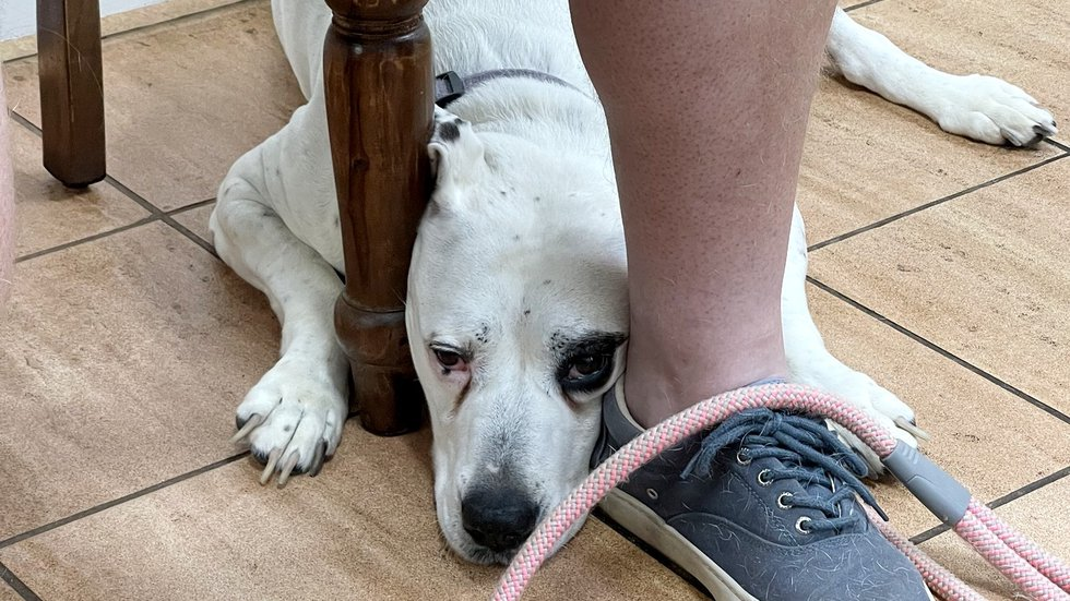 This North Augusta dog was bitten by a rabid fox. Luckily the dog's rabies vaccination was up...