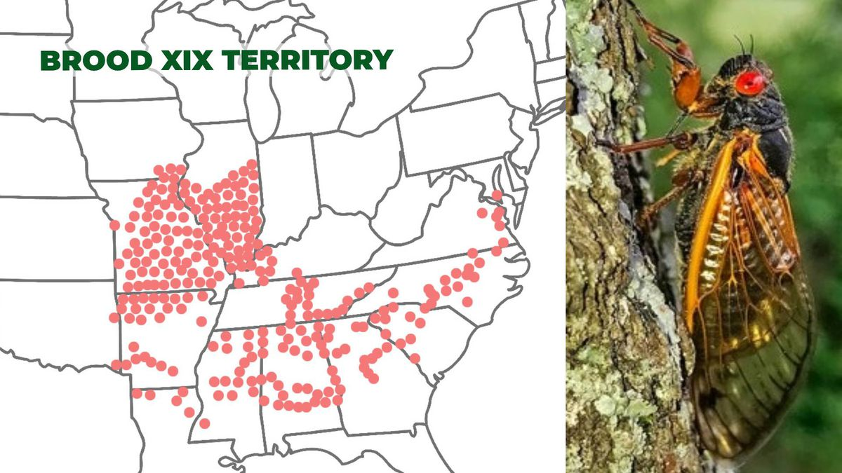 The red dots show areas, including the Augusta region, that are populated by Brood XIX cicadas. Images used with permission of Dr. Gene Kritsky, Mount St. Joseph University.