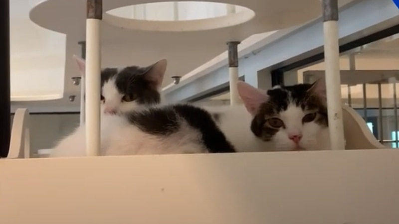 If you still want to meet these cats and other animals in person, you can visit the shelter at...