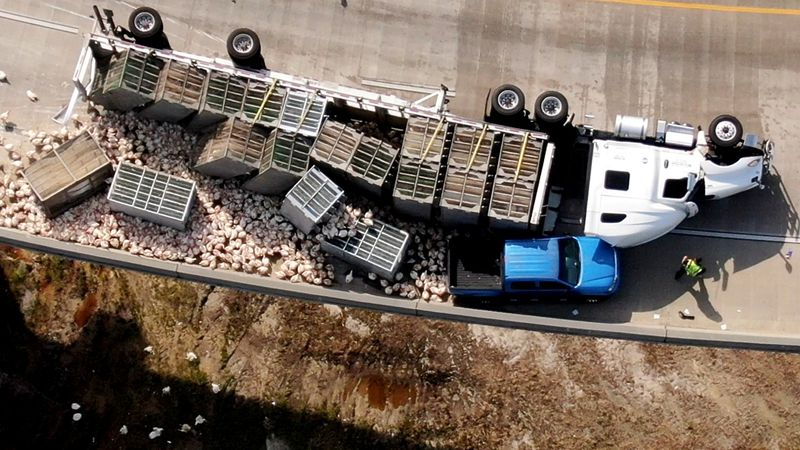 Chickens are scattered over the area after a big-rig overturned on an I-20 exit ramp at Bobby...
